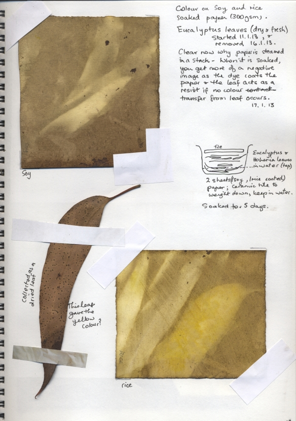 Eucalyptus on paper