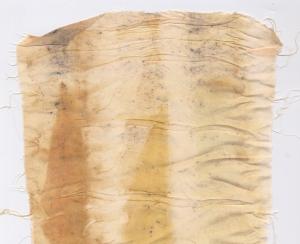 Silk e eucalyptus