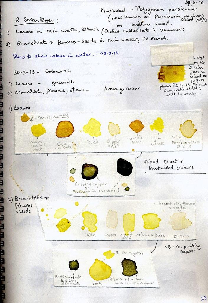 Persicaria-paper-tests