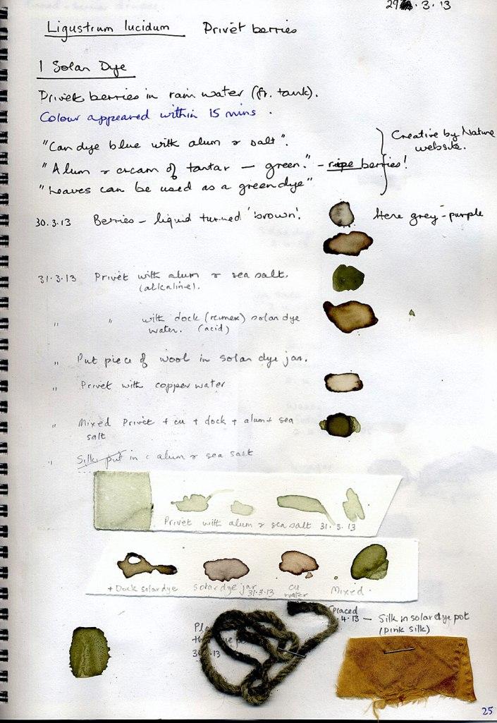 Privet-berries-paper-test