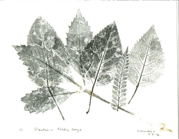 Glentui-leaves